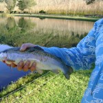 Rainbow Trout caught at http://www.flywaters.co.za/la-ferme/